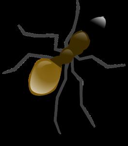ameisen bekaempfen